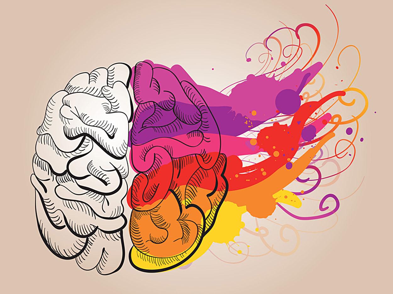 Illustriertes Gehirn, farbige Pinselstriche